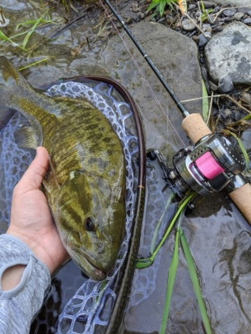 Tenryu Rayz with nice smallmouth bass.