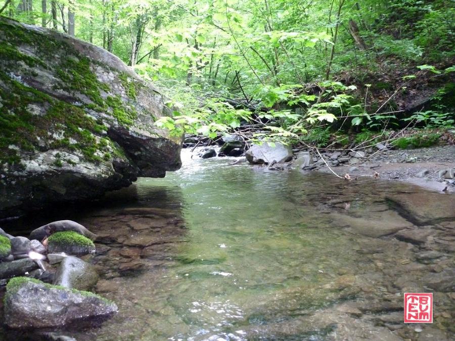 A Catskill Brookie Stream