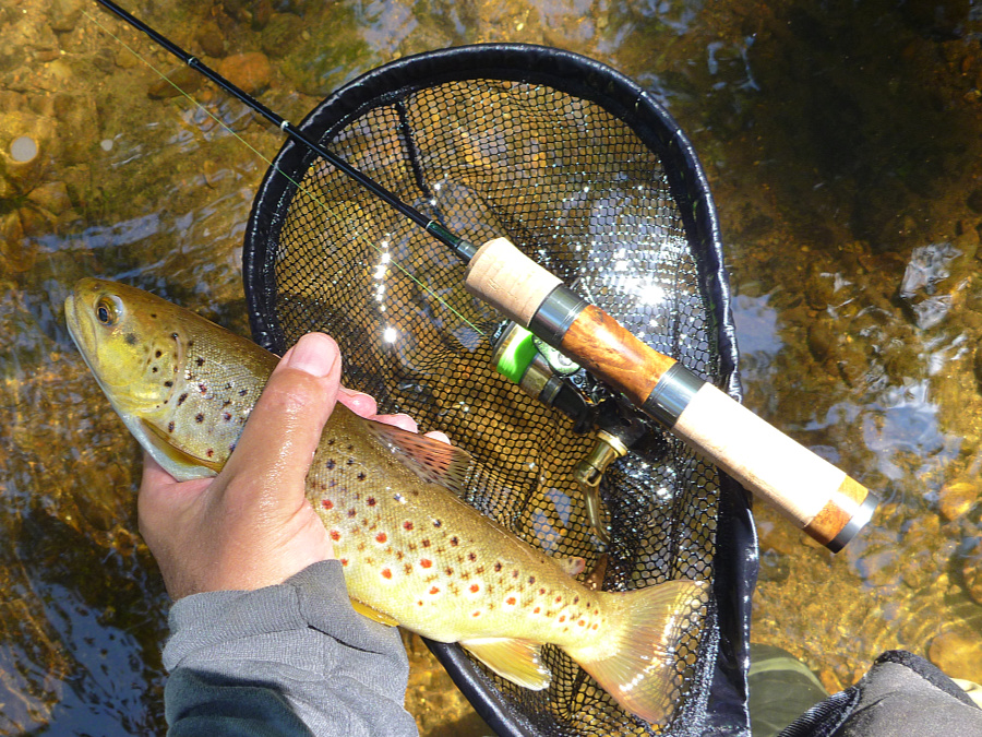 Tenryu spinning rod, nice brown trout.