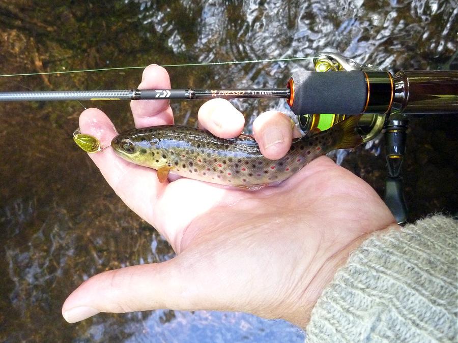 Angler holding small trout alongside Daiwa Presso ST 56XUL rod.