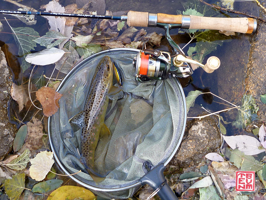 Still Life setting, with rod, net and trout. Leaves cover the water's surface.