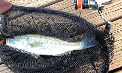 12 inch bass