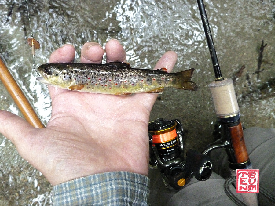 Angler holding small brown trout caught with brown spinner