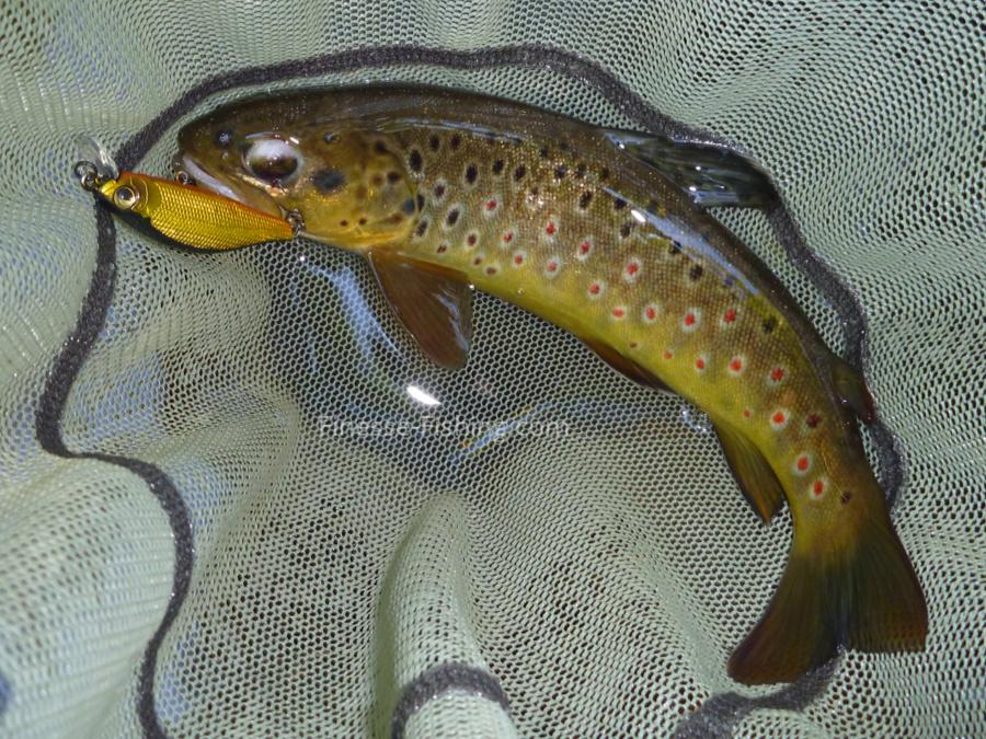 Daiwa Silver Creek Black Gold 50S