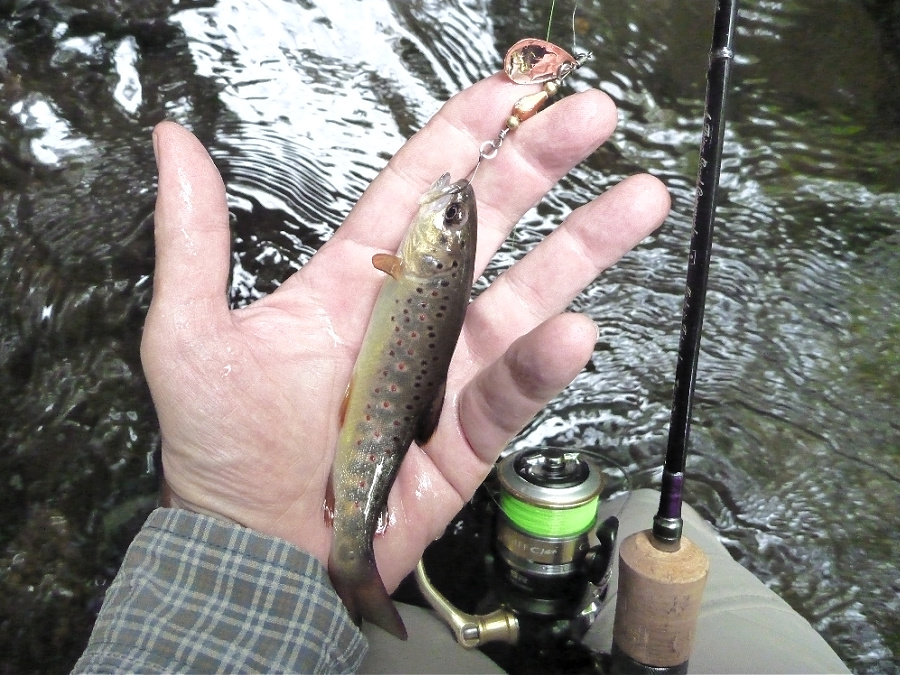 Angler holding small trout and spinning rod.