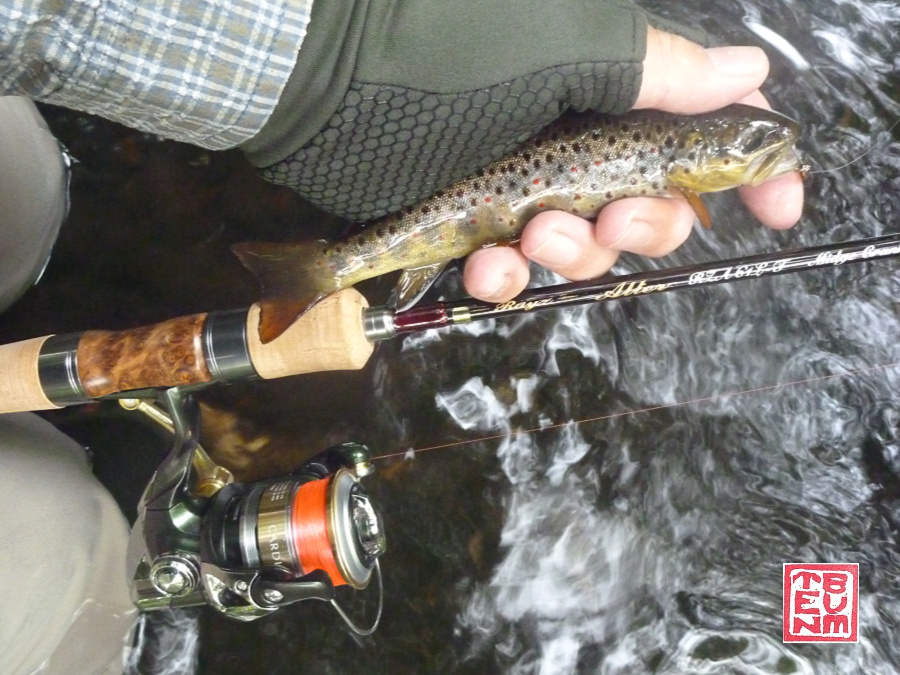 Tenryu Rayz Alter with small trout caught in small stream.