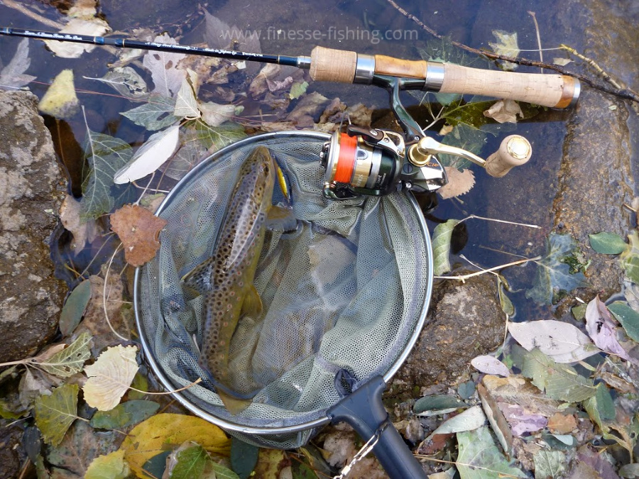 Spinning rod, brown trout in net.