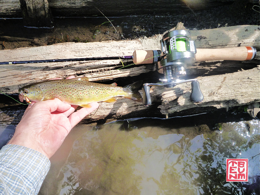 Angler holding brown trout alongside Tenryu Rayz Spectra RZS51LL-BC rod