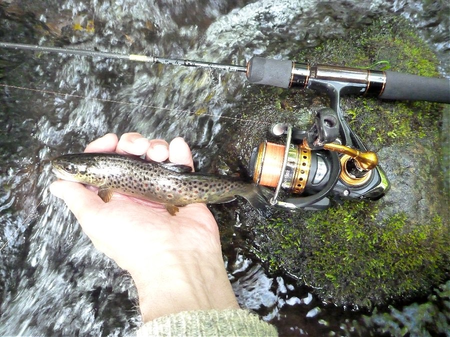 Angler holding small brown trout. Daiwa Presso ST 56XUL nearby laying on a rock.