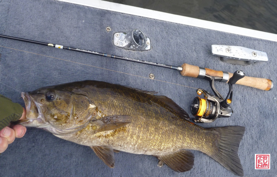 Large smallmouth bass caught with ester line.