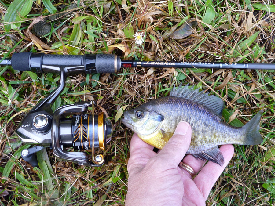 Lunakia with small bluegill.