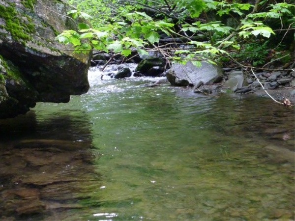 The brookies are there. Can you get your cast in there?