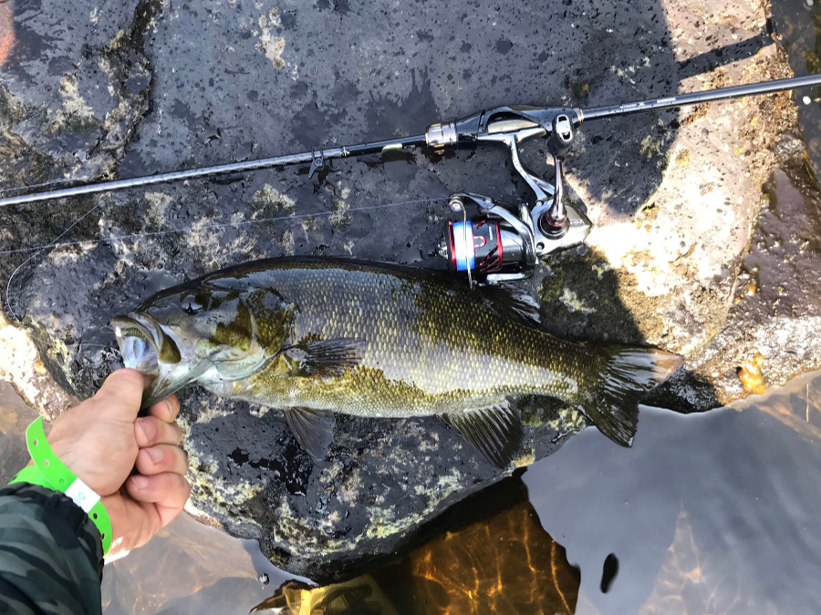 Shimano Soare SS Ajing S610LS with smallmouth bass - Charles C photo