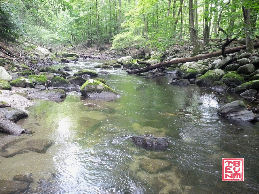 Small trout stream. Low clear water.