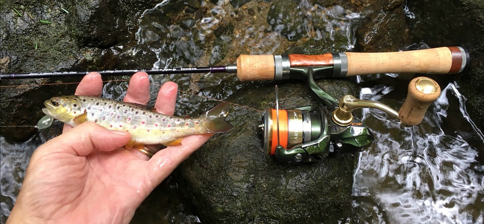 Angler holding small brown trout, with Spectra in background