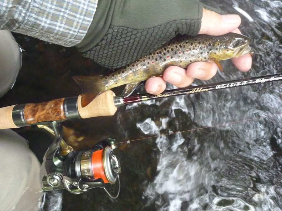 Small trout caught with spinning rod in a small stream.